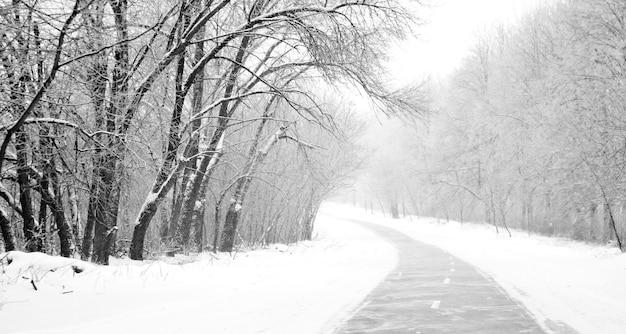 Camino rural en bosque de invierno