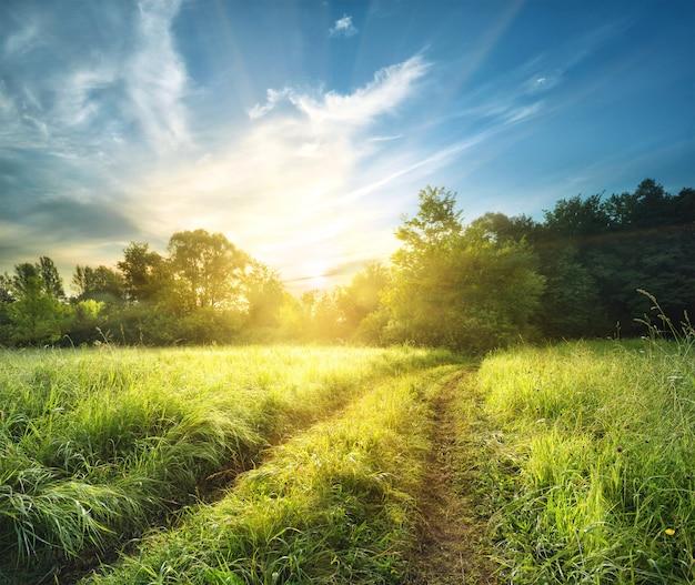 Camino rural en hierba alta y gruesa