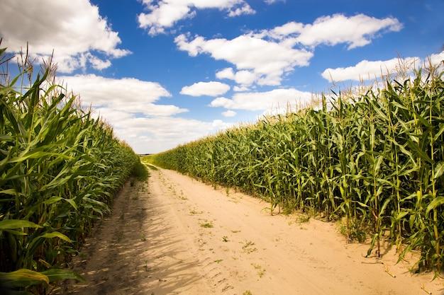 Camino rural no pavimentado en el año de verano.