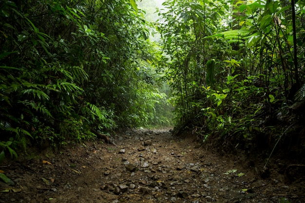 Camino en la selva tropical durante la temporada de lluvias en costa rica