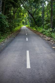 Camino de la selva