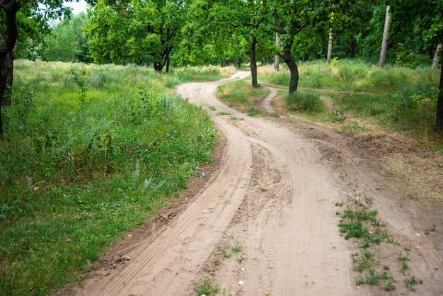 Camino sinuoso en el bosque, camino forestal en un hermoso paisaje