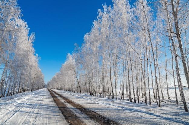 El camino sobre el fondo de árboles nevados.