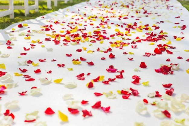 Camino de tela al arco floral para la ceremonia de boda, decorado con pétalos de rosa