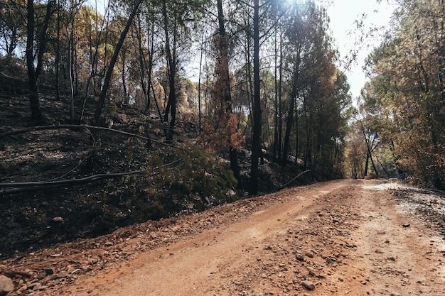 Camino de tierra entre el bosque desde un ángulo bajo.