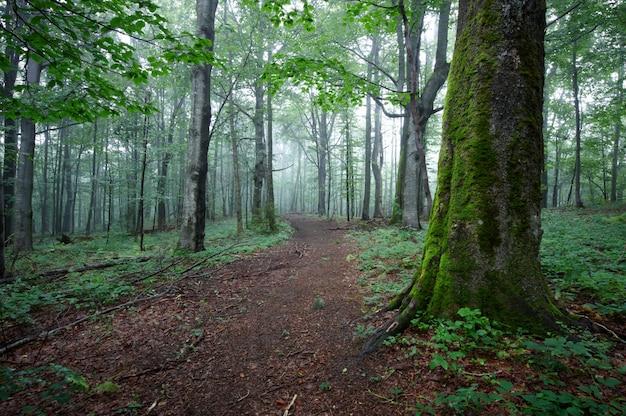 Camino de tierra por el bosque