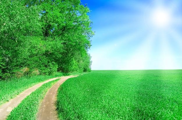 Camino de tierra en un campo verde con el sol