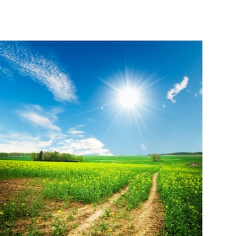 Camino de tierra en un día soleado