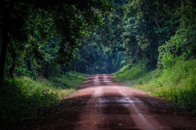 Camino de tierra en medio de un bosque con árboles y plantas.