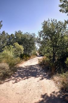 Camino de tierra de montaña para senderismo rodeado de encinas