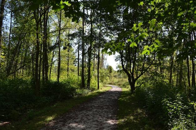 Camino de tierra parcialmente sombreado a través de árboles altos en el campo en un día soleado