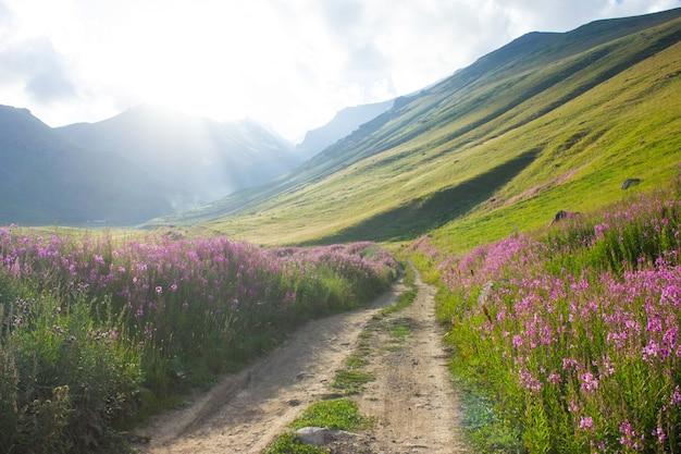 Camino de tierra que conduce a la montaña a través de flores.
