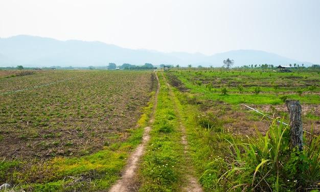 Camino de tierra rural y césped a ambos lados de la carretera. camino en campos rurales.