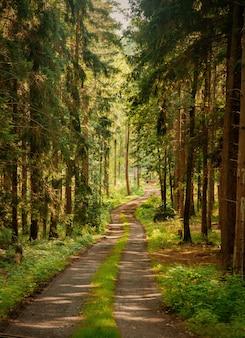 Camino de tierra a través de un bosque de pinos en los sudetes, polonia