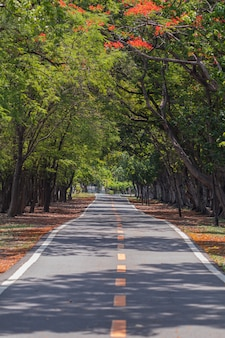 Camino a través y árboles en el parque.