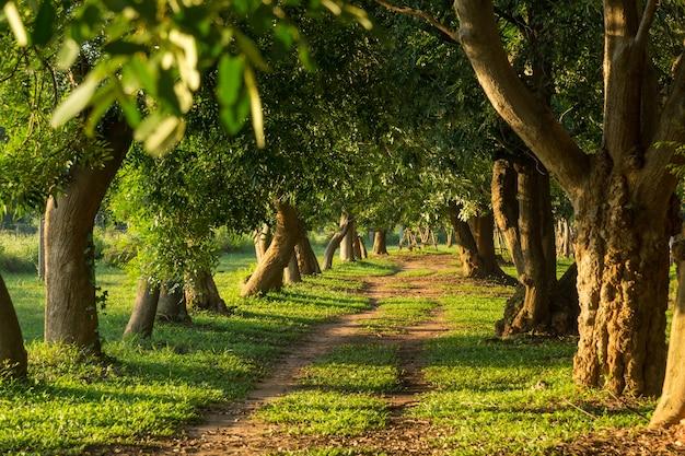 Camino a través de los árboles