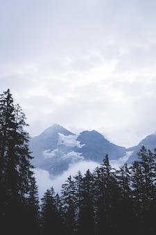 Camino vacío con bosque y niebla.