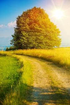 Camino de verano