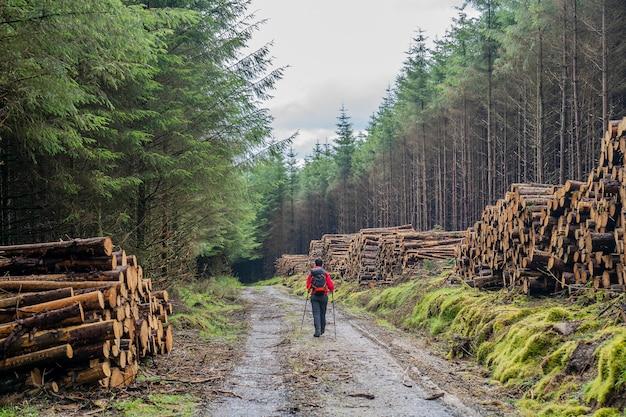 Camino de wicklow con troncos apilados a los lados de la carretera y una chica excursionista en el medio.