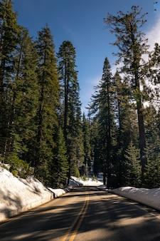 Caminos a través del parque nacional sequoia en california