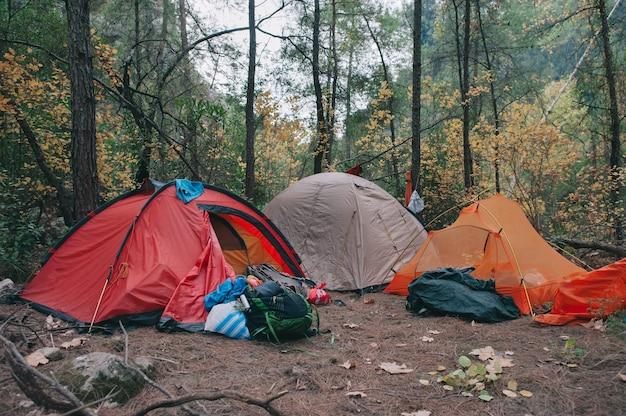 Camping y tiendas bajo el bosque de pinos en la mañana