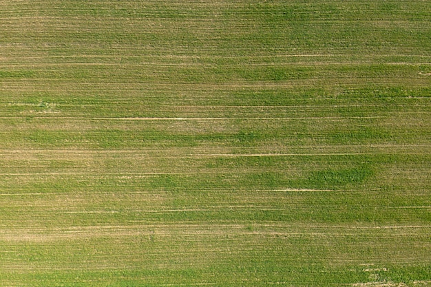 Campo agrícola sembrado, vista desde arriba