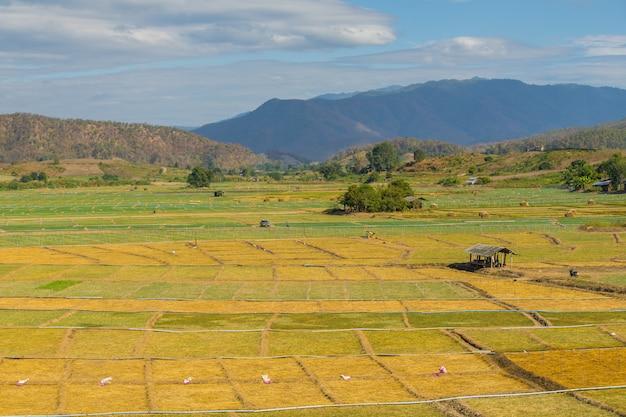 Campo de ajo con choza pequeña en pai, tailandia