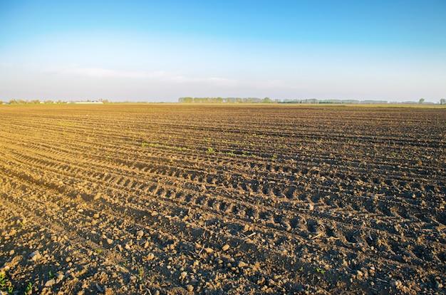 Campo arado después del cultivo para plantar