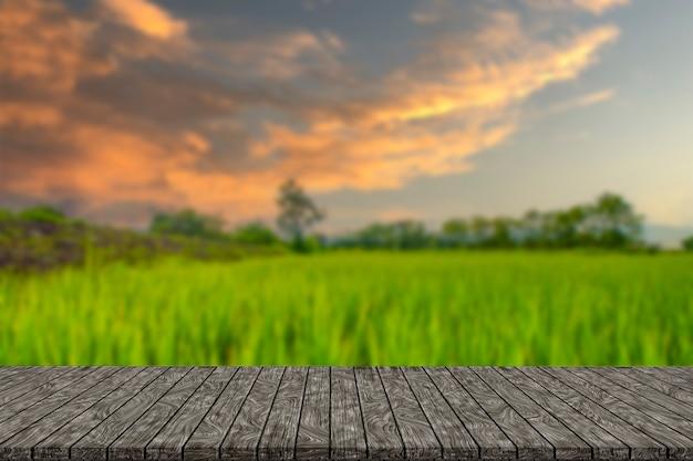 Campo de arroz y fondo del cielo al atardecer con luz solar y nubes nubladas
