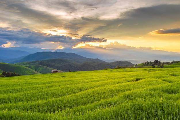 Campo de arroz en terrazas verdes en pa pong pieng, mae chaem, chiang mai, tailandia