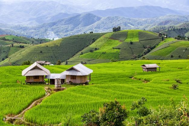 Campo de arroz en terrazas verdes en pa pong pieng, mae chaem, provincia de chiang mai, tailandia