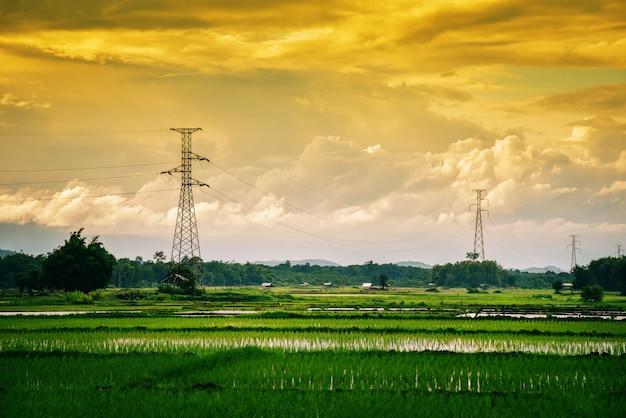Campo de arroz verde del paisaje con poste eléctrico de alto voltaje y puesta de sol