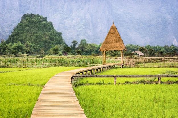 Campo de arrozal en vang vieng - laos pdr - pasarela a la cabaña