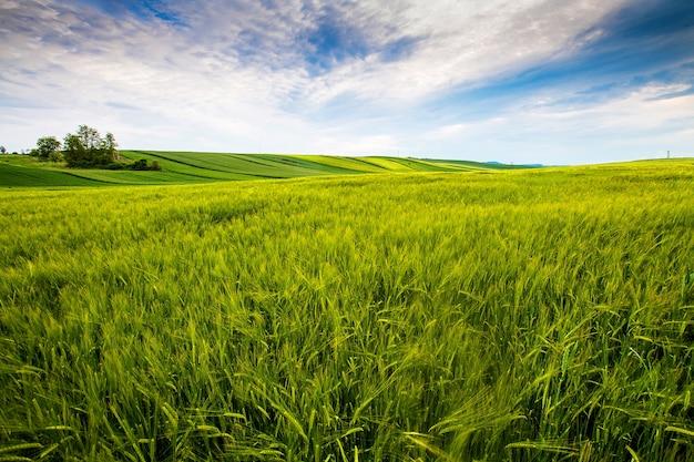 Campo de campo, día soleado en el campo