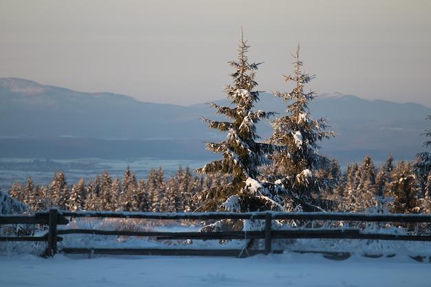 Campo cubierto de árboles de hoja perenne y nieve con montañas bajo la luz del sol