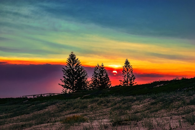 Campo cubierto de hierba con siluetas de árboles durante una hermosa puesta de sol en la noche