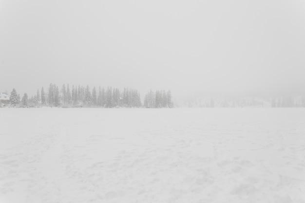 Campo cubierto de nieve y bosque en tormenta de nieve