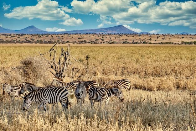 Campo cubierto de vegetación rodeado de cebras bajo la luz del sol y un cielo azul
