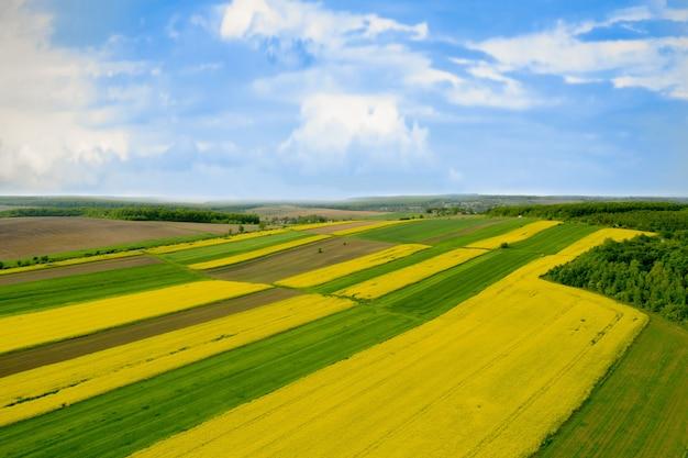 Campo cultivado de colza amarilla contra el cielo azul