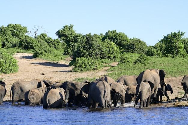 Campo familiar con elefantes