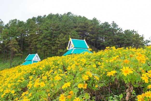 Campo de flor amarilla