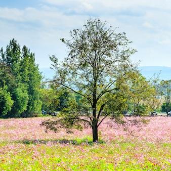 Campo de flor de cosmos con árboles y cielo nublado