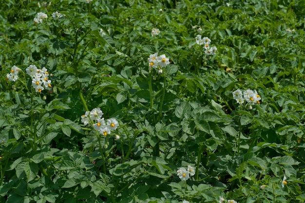 Campo de flores en una granja.