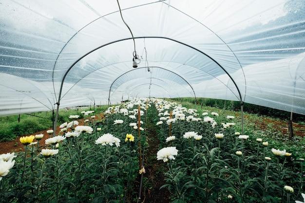 Campo de flores en invernadero
