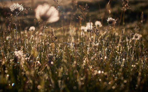 Campo con flores secas sobre un fondo borroso