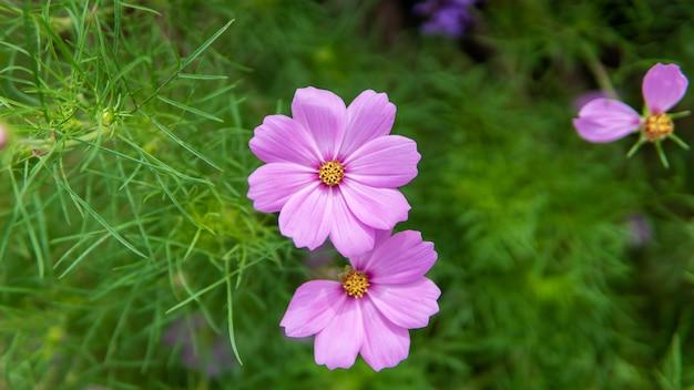 Campo de flores violetas frescas