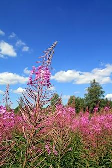 Campo flowerses sobre fondo celestial