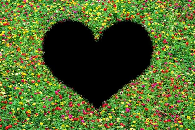 Campo en forma de corazón de zinnia común bellamente con hojas verdes creciendo