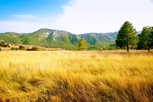 Campo de hierba dorada con montañas de pinos