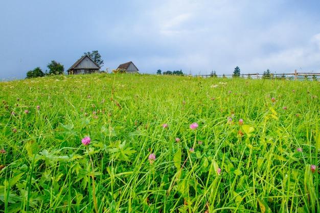 Campo de hierba en las montañas